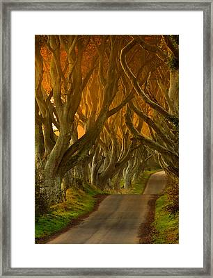 The Dark Hedges II Framed Print