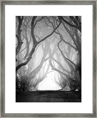 The Dark Hedges Iv Framed Print