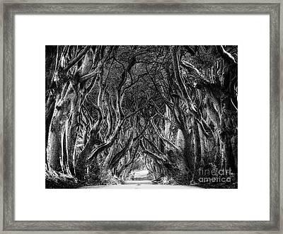 The Dark Hedges Framed Print