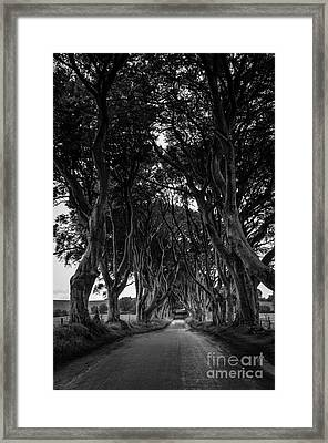 The Dark Hedges Framed Print by Rjd Photography
