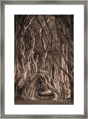 The Dark Hedges - Sepia Framed Print by Brian Jannsen