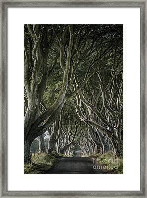 The Dark Hedges V Framed Print by Pawel Klarecki