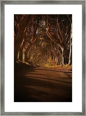 'the Dark Hegdes' Framed Print by Mark Hinds