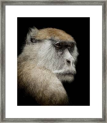 The Day Dreamer Framed Print by Paul Neville
