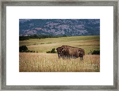 The Days End Framed Print by Tamyra Ayles