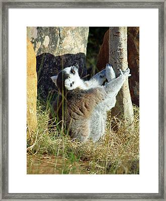 The Debate Framed Print