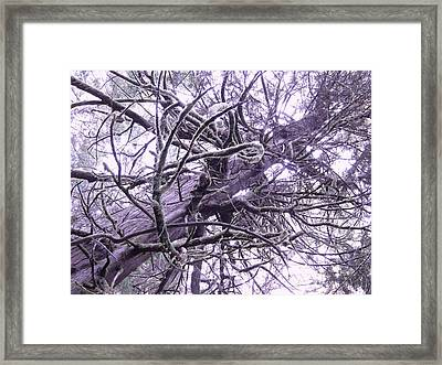 The Deception Tree Framed Print