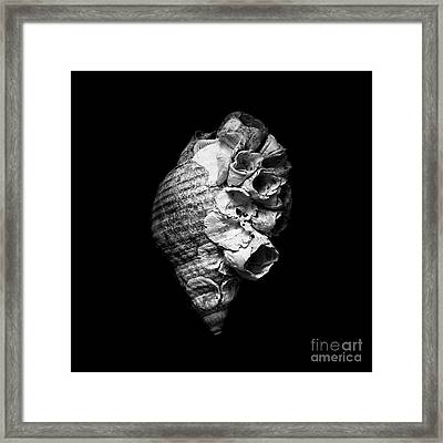 The Decorated Seashell Framed Print