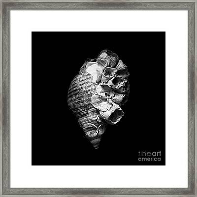 The Decorated Seashell Framed Print by Masako Metz