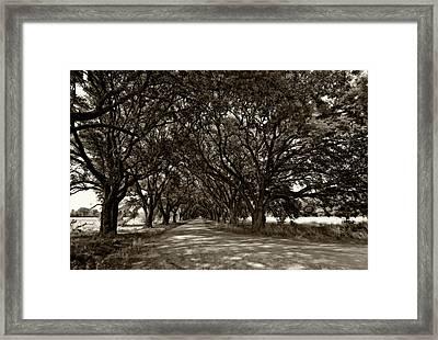 The Deep South Bw Framed Print by Steve Harrington