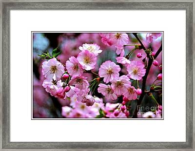 The Delicate Cherry Blossoms Framed Print