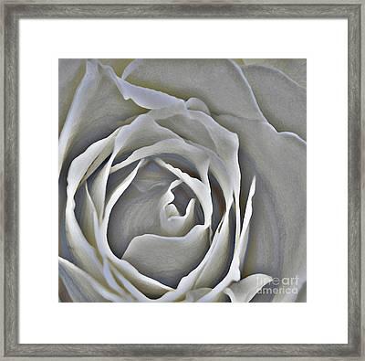 The Delicate Rose Framed Print by Linda Parker
