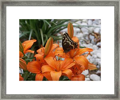The Descent Framed Print by Debbie May
