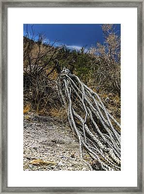 The Desert Sentinel Framed Print