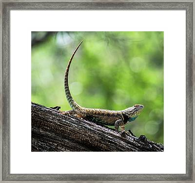 Framed Print featuring the photograph The Desert Spiny Stance  by Saija Lehtonen