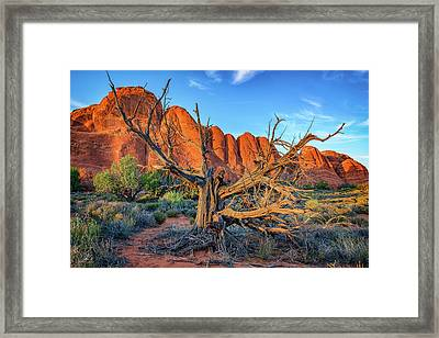 The Devil's Garden Framed Print by Rick Berk