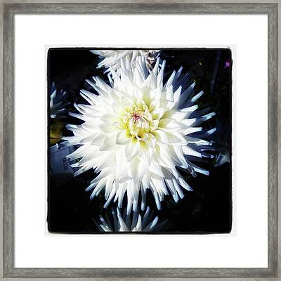 Framed Print featuring the photograph The Devoted Dahlia. The White Dahlia by Mr Photojimsf