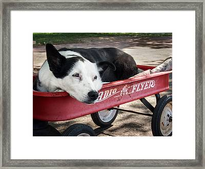 The Dog And The Radio Flyer Framed Print by Mary Lee Dereske