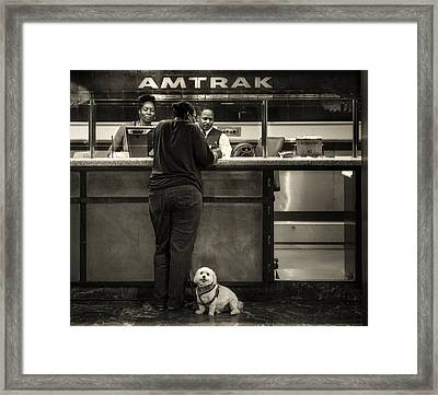 The Doggy Wants A Seat By The Window.. Framed Print