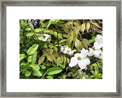 The Dogwood Jungle Framed Print by JC Findley