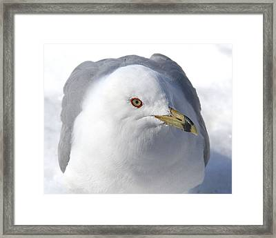 Framed Print featuring the photograph The Dreamer by Doris Potter