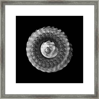 The Dreaming Moon Of Mandala Rose Framed Print by Jacqueline Migell
