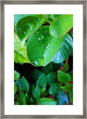 The Drop Framed Print by Owen Ashurst