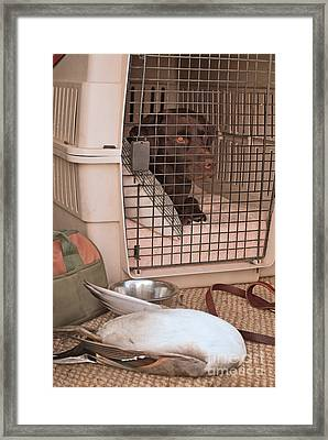 The Duck Dog Framed Print by Donna Greene