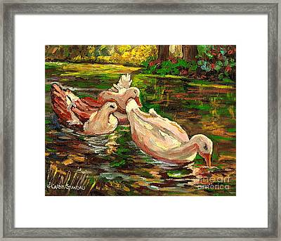 The Duck Pond At Botanical Gardens Framed Print by Carole Spandau