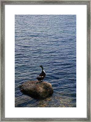 The Duck Framed Print by Siobhan Yost