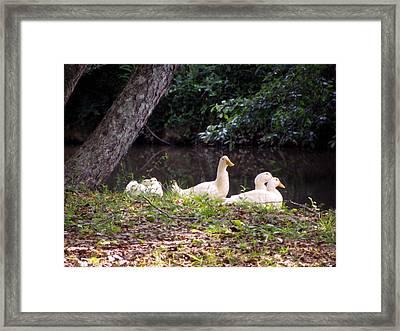 The Ducks Framed Print by Eva Thomas
