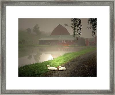 The Ducks In The Morning Fog At Maple Hill Farm Framed Print