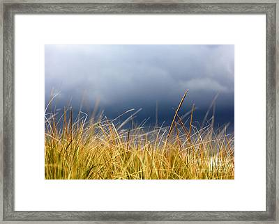 Framed Print featuring the photograph The Tall Grass Waves In The Wind by Dana DiPasquale