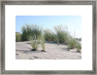The Dunes Framed Print by Dennis Curry