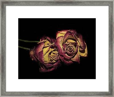 The Dying Rose Framed Print