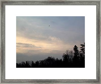 Framed Print featuring the photograph The Eagle Has Flown by Kent Lorentzen
