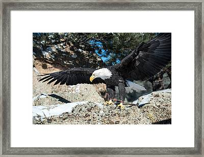 The Eagle Has Landed Framed Print
