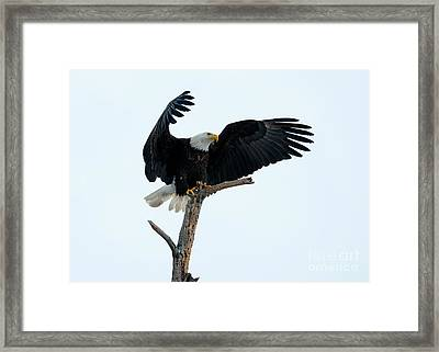 The Eagle Has Landed Framed Print by Mike Dawson