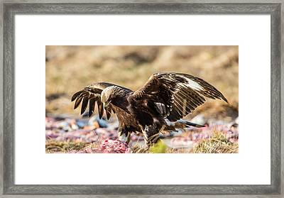 The Eagle Have Come Down Framed Print by Torbjorn Swenelius