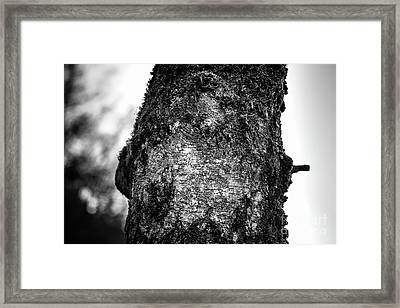 The Eagle In The Tree Framed Print