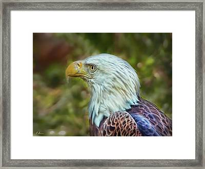 Framed Print featuring the photograph The Eagle Look by Hanny Heim