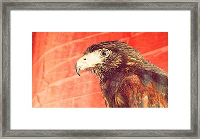 The Eagle Framed Print by Pedro Venancio