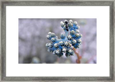 The Earth Is Blue... Framed Print
