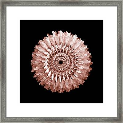 The Earthy Red Mandala Of Rose Framed Print by Jacqueline Migell