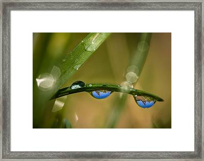 The Eiffel Tower For The Insects Framed Print by Charly Lataste