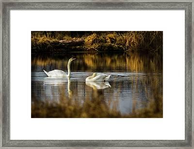 The Elegance Of Nature Framed Print