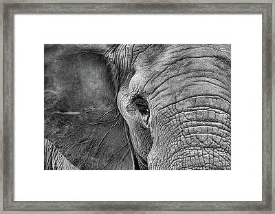 The Elephant In Black And White Framed Print by JC Findley