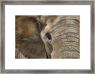 The Elephant Framed Print by JC Findley