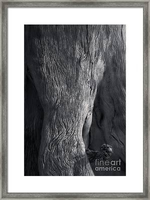 The Elephant Tree Framed Print by Royce Howland