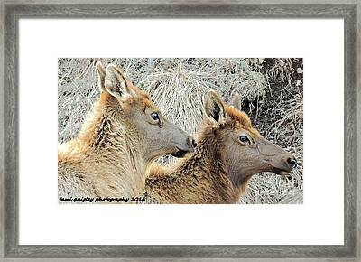 The Elk Of Winter  Framed Print